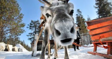 14 поразительных фактов о Финляндии.