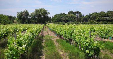 О винном туризме в Провансе и «Дороге вина».