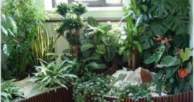 Комнатные растения, которые очищают воздух в доме.