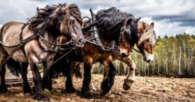 Почему мощность измеряется в «лошадях»