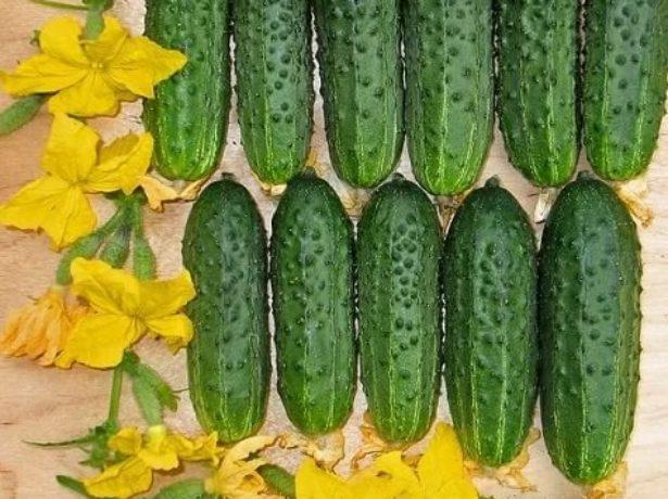 12 полезных свойств обычных огурцов