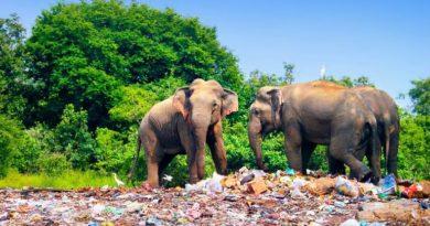Как 187 стран мира договорились о борьбе с пластиком