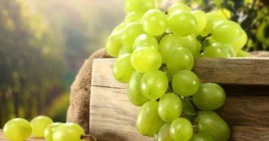 Причины есть виноград каждый день