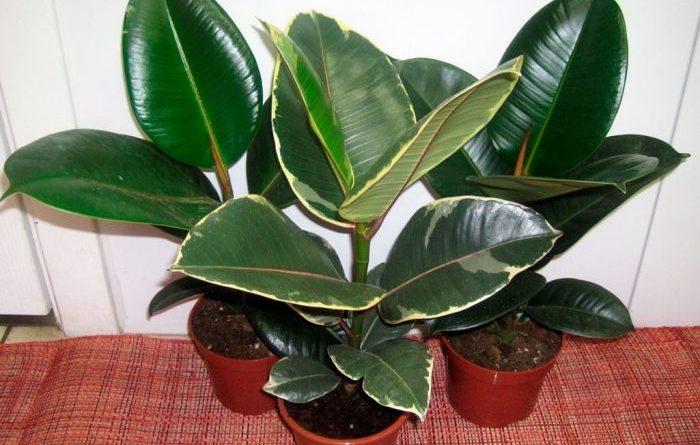 4 комнатных растения, которые должны быть в каждой квартире!