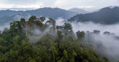 Все, что вы хотели знать о тропических лесах