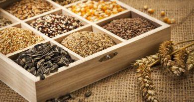 Как проращивать зерна и семена
