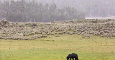 Где живут бурые медведи: 5 мест, где можно увидеть косолапого