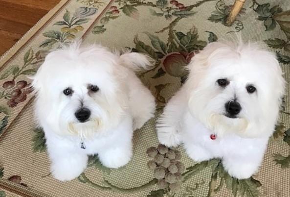 Две живые копии любимой собаки разочаровали Барбру Стрейзанд