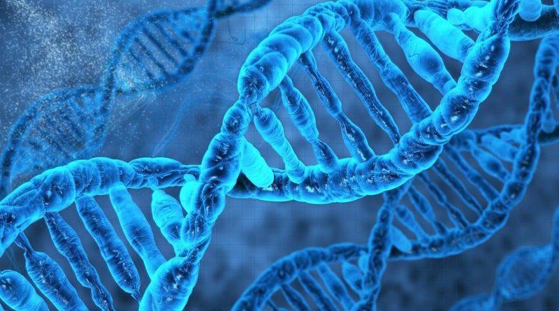 Интересно знать — факты о ДНК
