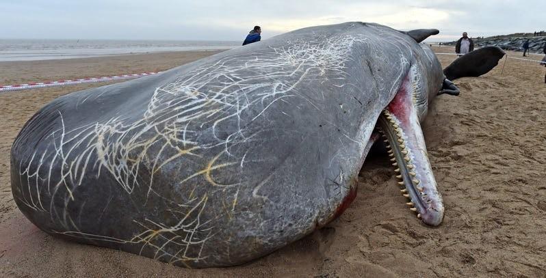Названы самые опасные пляжи планеты