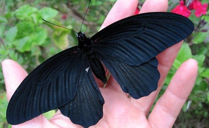 10 фантастических созданий природы, которые действительно существуют