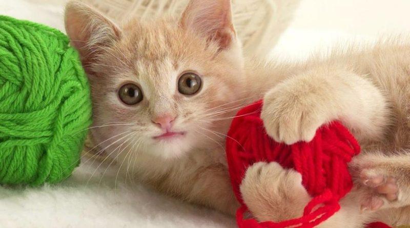 Кошка в доме: пушистый эликсир здоровья