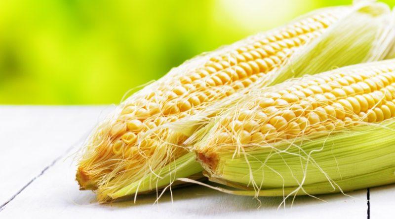 Кукурузные рыльца - лечебные свойства