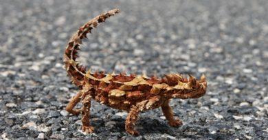 Самые удивительные животные, оставшиеся на земле в единственном экземпляре
