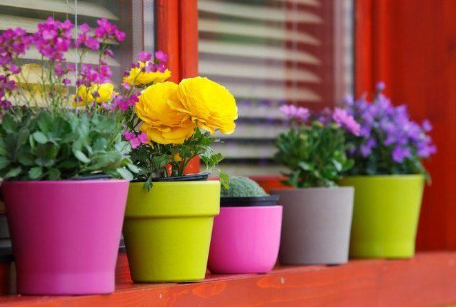 Удобрения для домашних цветов