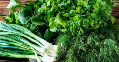Зелень – единственный вид пищи, содержащий абсолютно все питательные вещества