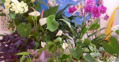 Чем подкормить комнатные цветы?