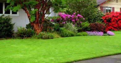 Как правильно стричь газон