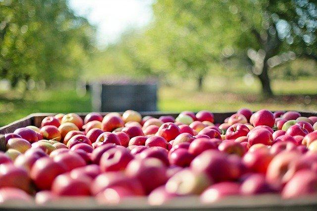 Лайфхаки для яблонь. Выбираем сорта по вкусовым предпочтениям