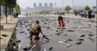 От чего бывают рыбные дожди в Гондурасе?