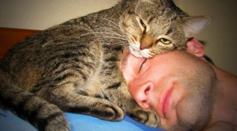 Почему коты так обожают спать на нас?