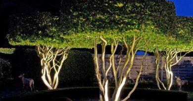 Подсветка деревьев в ландшафте