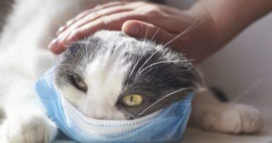 У котов в Ухане обнаружили коронавирус