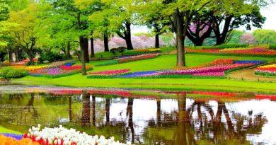 Крах цветочному бизнесу. Из-за эпидемии в Нидерландах уничтожаются миллионы цветов каждый день