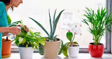 Подкормка комнатных цветов-пышная листва и хорошее цветение