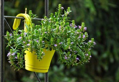 Благоприятные дни для комнатных растений: пересаживаем цветы по Луне в 2020 году