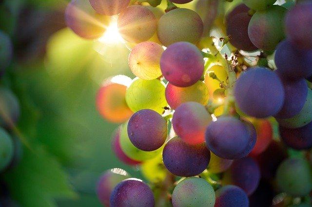 Болезни винограда: описание, способы лечения