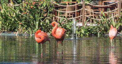 Доминикана: курорты откроются с 05.07.2020 года