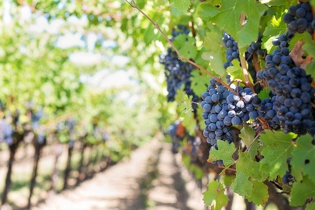Формировка винограда первого года и в последующие года