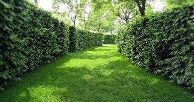 Как и из чего сделать живую изгородь?