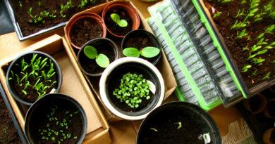 Как легко и экономно посеять мелкие семена
