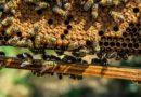 Места и сроки сбора меда