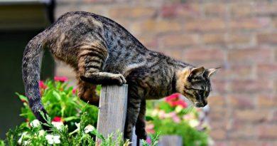 Осторожно дачник! Или за какой забор в саду можно получить штраф?