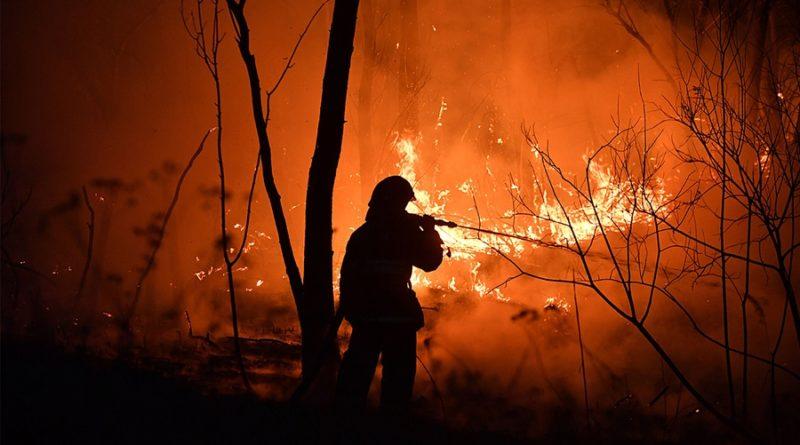Приватизировать или сжечь? Как заставить российские леса приносить деньги