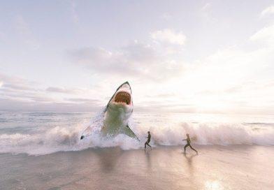 Водятся ли в Абхазии акулы и что нужно знать отдыхающим?