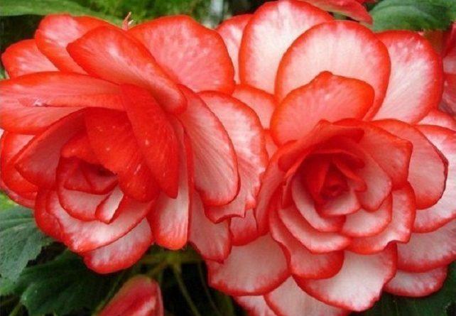 Десять эффективных средств для защиты растений