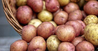 Сорта картофеля. Особенности. Уход