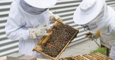 Типы пчелиных ульев: конструкции и характеристики