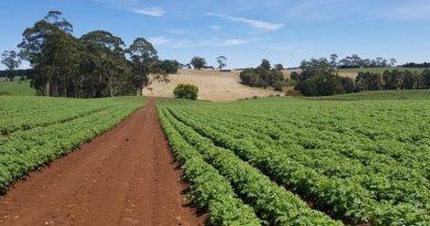 Подкормка картофеля: виды удобрений, рекомендуемая дозировка, правила внесения