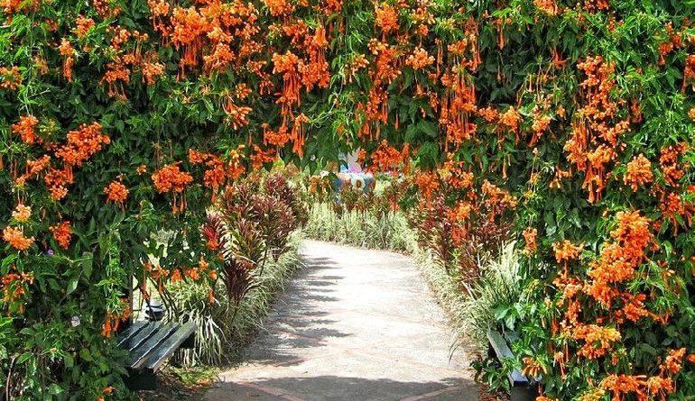 Декоративные лианы-многолетники для дачи и сада