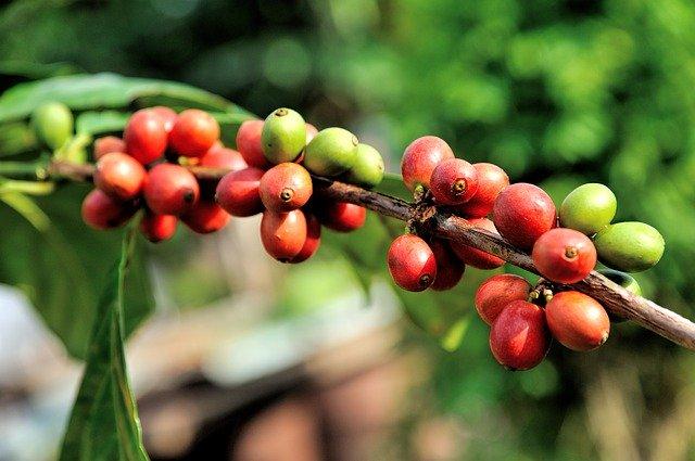 Как обработка кофе влияет на вкус напитка?