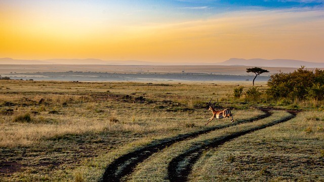 Кения открывает границы для туристов из России
