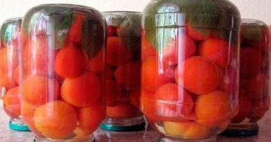Консервирование помидоров с малиновыми листьями