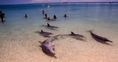 Пляж Манки-Миа с дельфинами