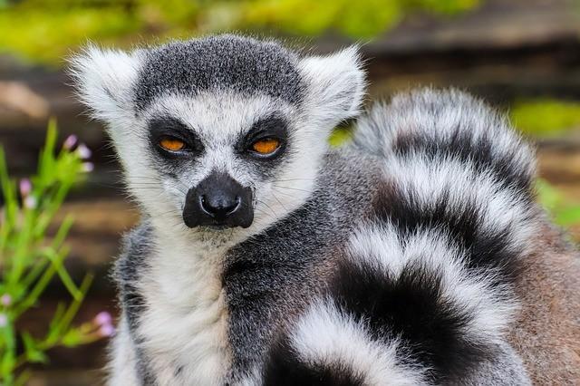Пляжный отдых на Мадагаскаре и достопримечательности острова