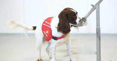 Собак учат определять Covid-19 по запаху